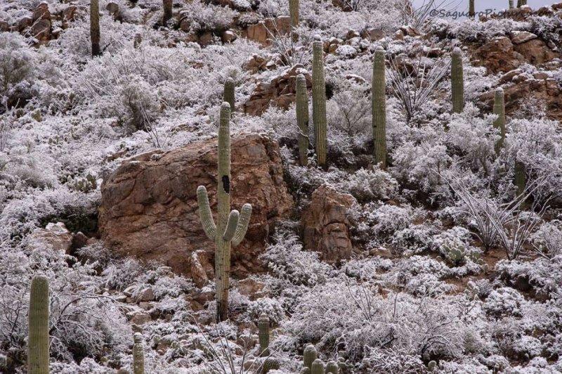 photo du desert sous la neige