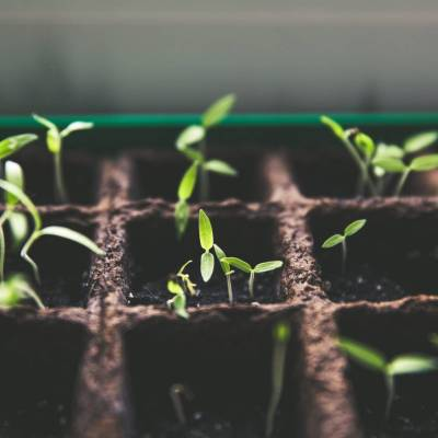 Sprouting Seed in Ready Soil
