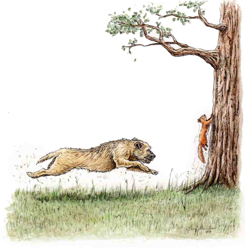 Original commissioned picture of a border terrier sprinting across the grass towards a squirrel who is running up a tree