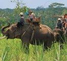 Bali Elephant safari
