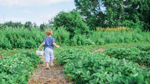 Kind in Gemüsefeld