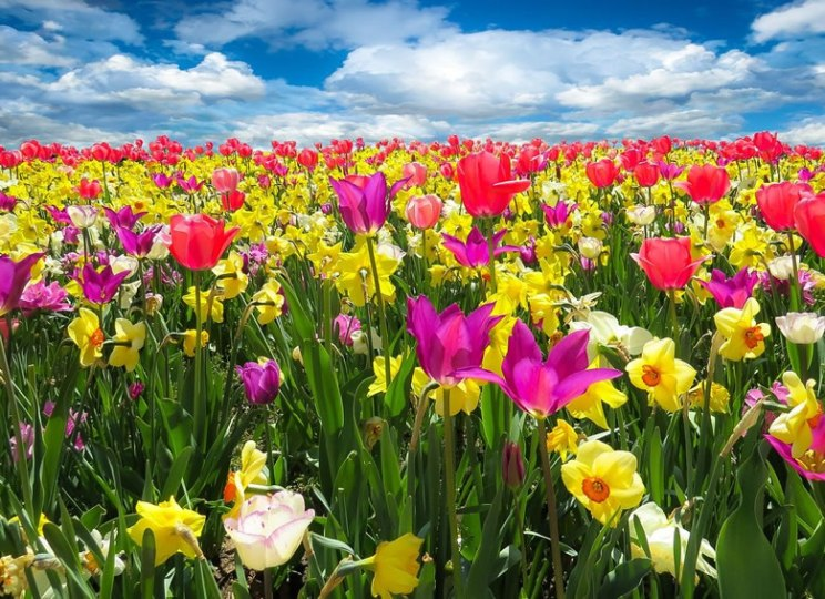 Spring is here. Photo G. Gellinger (Pixabay)