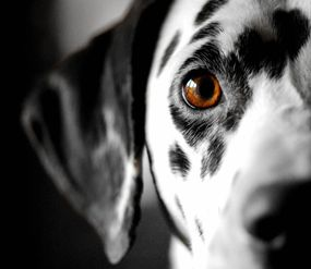 Professional Pet And Animal Photography In Cumbria
