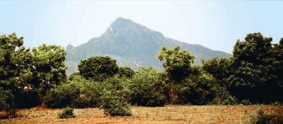 Arunachala, Tamil Nadu, India