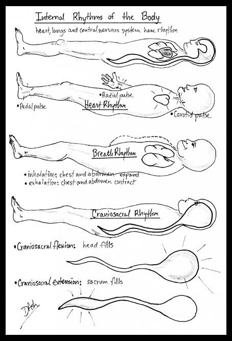 body rhythms img
