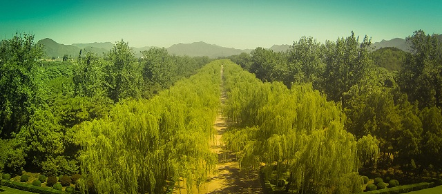 Willow Grove - Photo by Trey Ratcliff