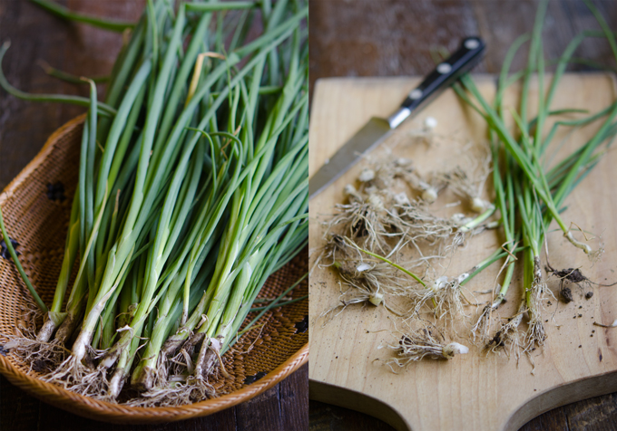 Kroean green onion have long and slender stems.