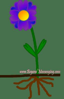 flower-parts