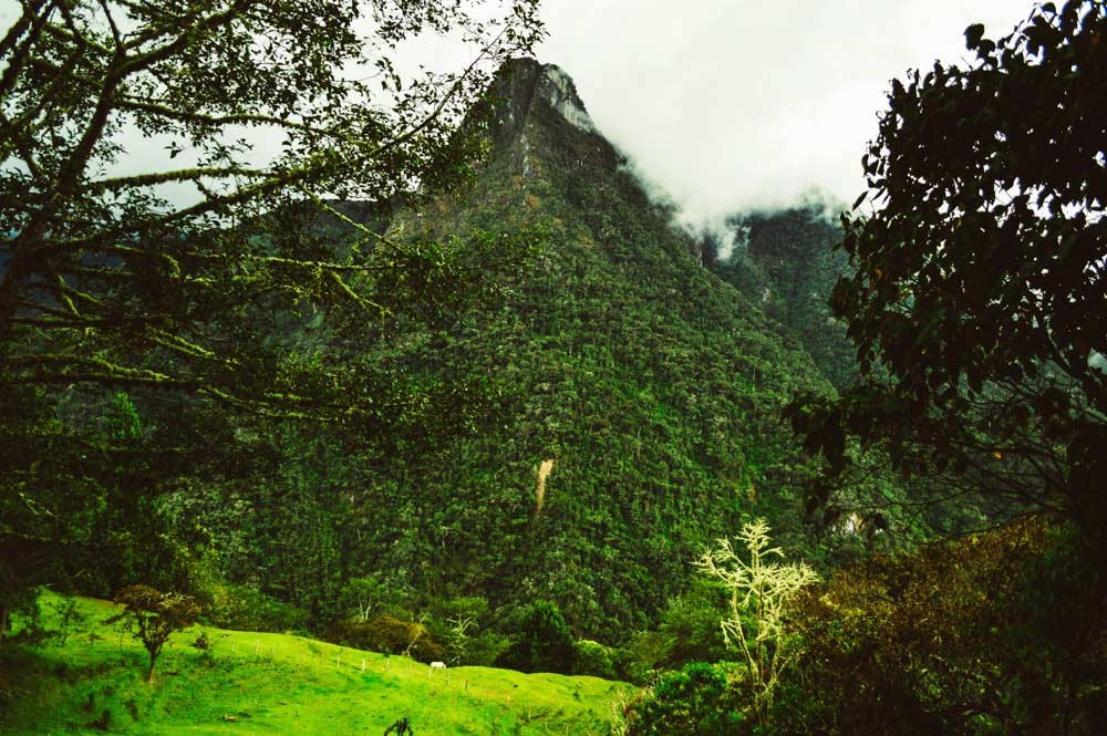 Cocora Valley, Salento, Colombia in fogging weather