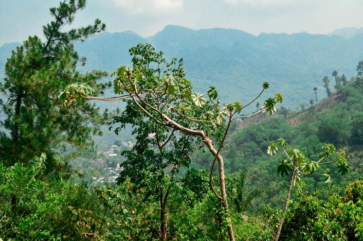 view of the forest in Semuc Chamepy