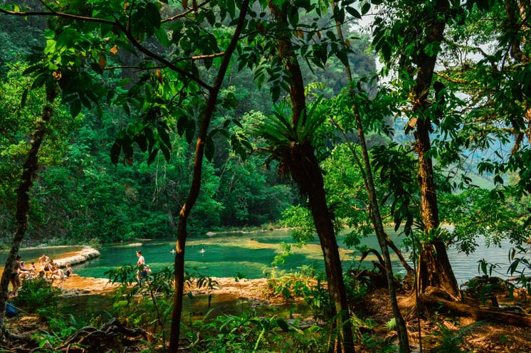 forest in Semuc Champey