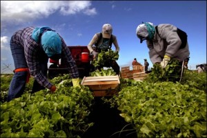 farmworkers_1227834a