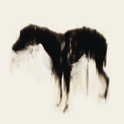 My Black Dog was back. (image from 'Black Dog' by Rachel Howard)