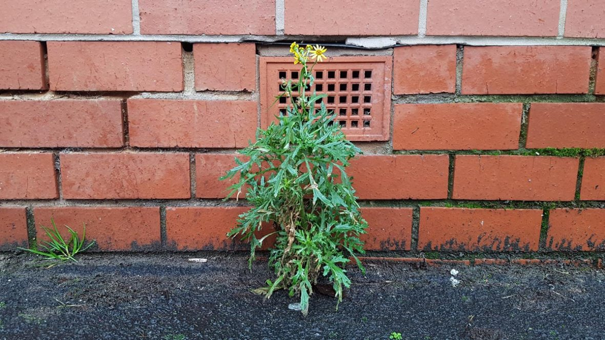 plant growing in city in front of a brick wall