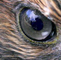Source: Wikipedia and Steve Jurvetson - http://www.flickr.com/photos/jurvetson/162116759