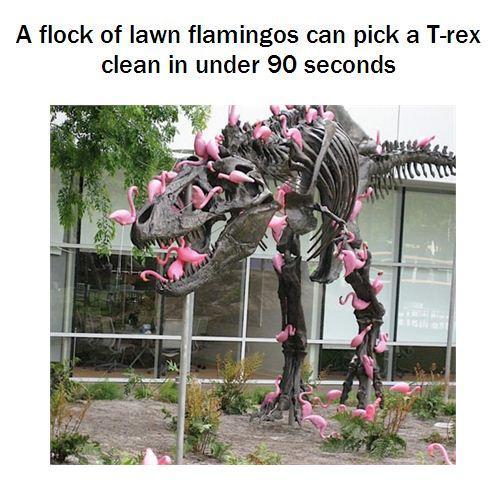 Flamingo Rex