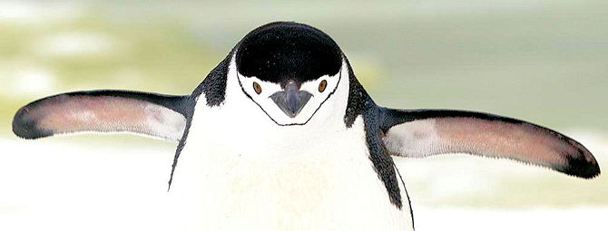 Smile for the Penguin!
