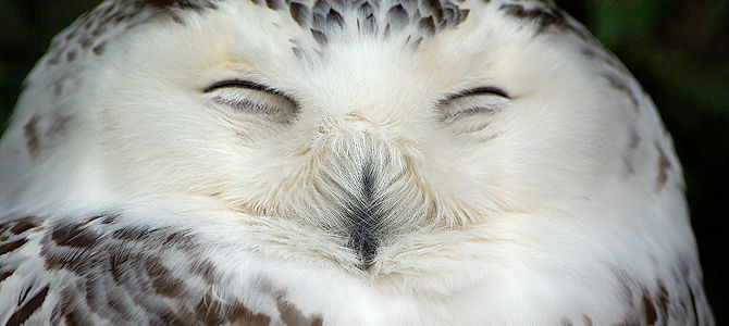 Owls to Smile About!