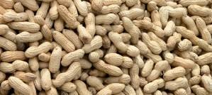 Whole Raw Peanuts - Photo by Craig Nagy