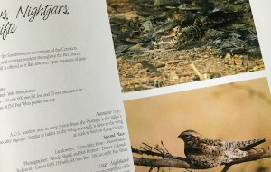 The Lens and The Land - Nightjars