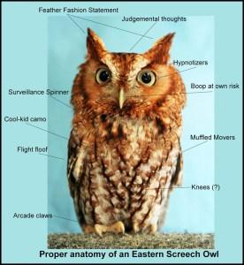 Owl Anatomy Meme