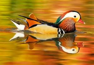Autumn Reflections - Photo by Nobuo Iwata