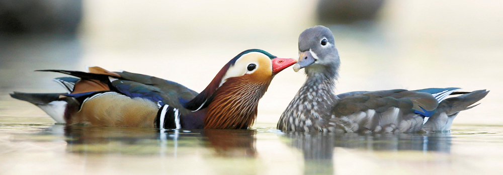 Kissy Face - Photo by Nobuo Iwata