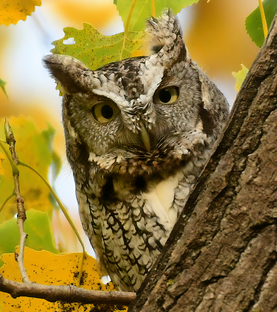Peek-a-Boo - Photo by Mike Streicher