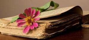 Beloved Old Book - Photo by latteda