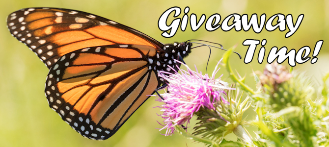 Butterfly Feeder Giveaway