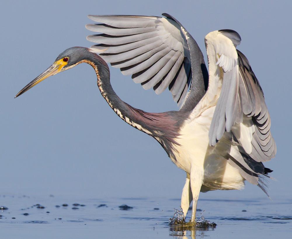 Winging It - Photo by Ryan Sanderson