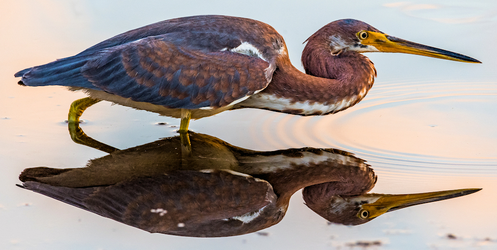 Perfect Reflection - Photo by Don Miller