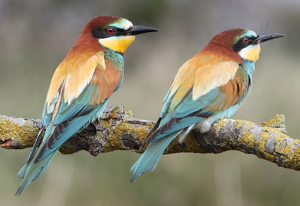 Perfect Pair - Photo by Free Photos, CCO