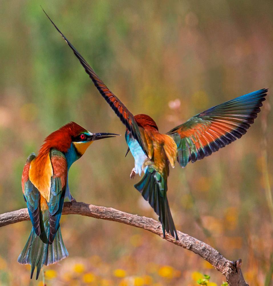 Colorful Duet - Photo by Leoncio Hernandez Rodriguez