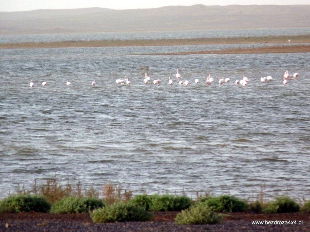 Flamingi na jeziorze na pustyni. Nigdy potem ich nie spotkałem, jeziora też nie...