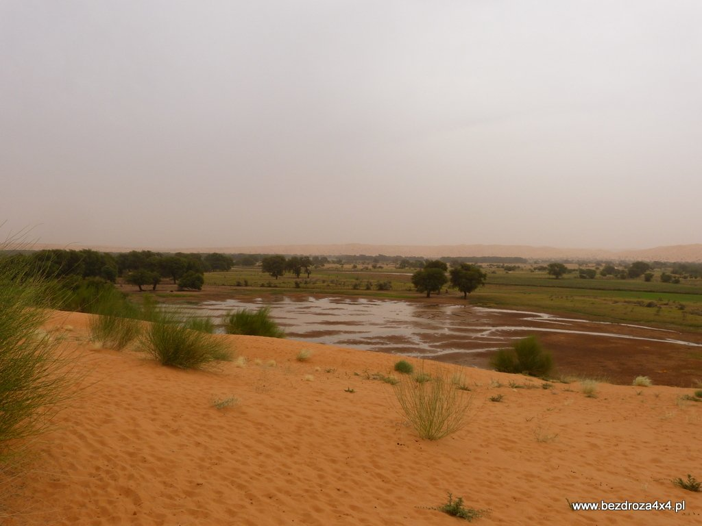 Pierwsze plantacje w Mauretanii - w końcu jest mokro
