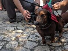 blindegeleidehond of hulphond vakantie
