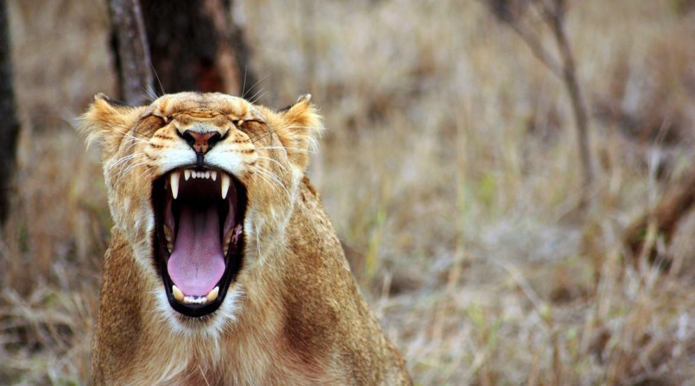 Ciężarna jak lew - co wkurza kobietę w ciąży