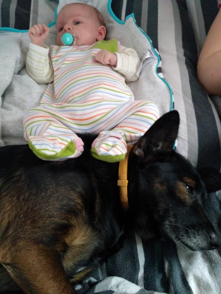 Pies i niemowlę