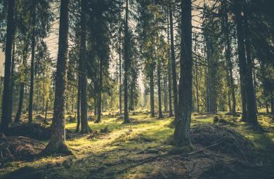 las jeszcze nie pełen śmieci