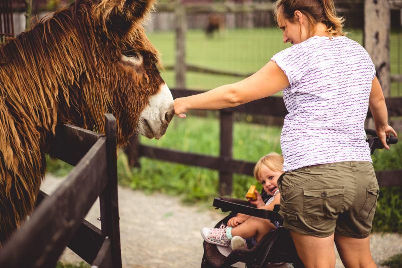 mini zoo z dzieckiem głaskanie zwierząt