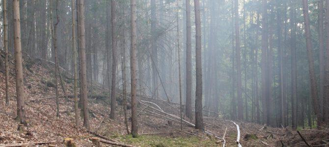 Waldbrand in Latschach bei St. Egyden