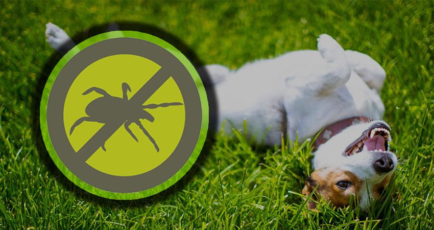 Flea & Tick Control