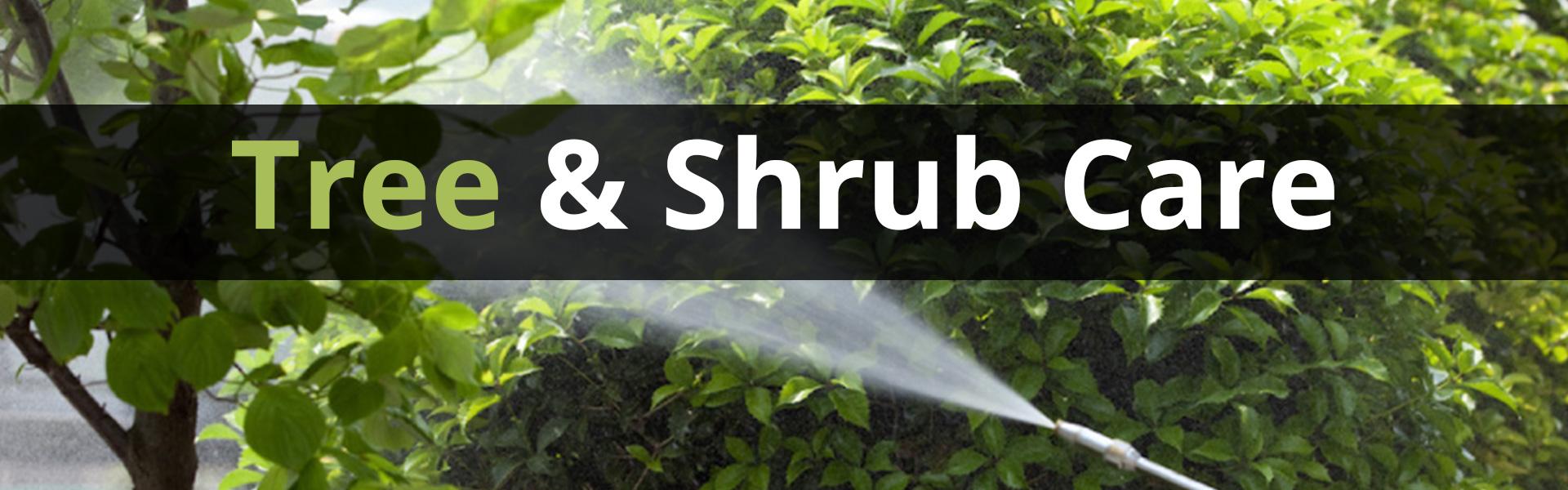 trett and shrub care
