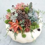 Succulent Pumpkin Workshop A Take Make Class Botanical Garden Of The Ozarks