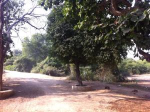 Viharavana