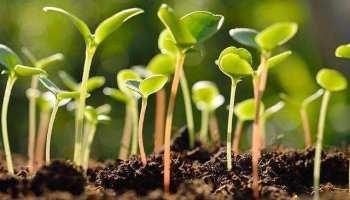 बीज खेती का मूल आधार