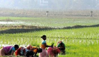 वैश्विक बाजार में आखिर क्यों बढ़ रही रागी की खेती की मांग