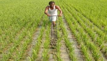 खेती-किसानी में किया कुछ ऐसा बदलाव की बंजर जमीन भी देने लगा फल