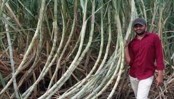खेती-किसानी से अपनी अलग ही पहचान बनाने में जुटे युवा